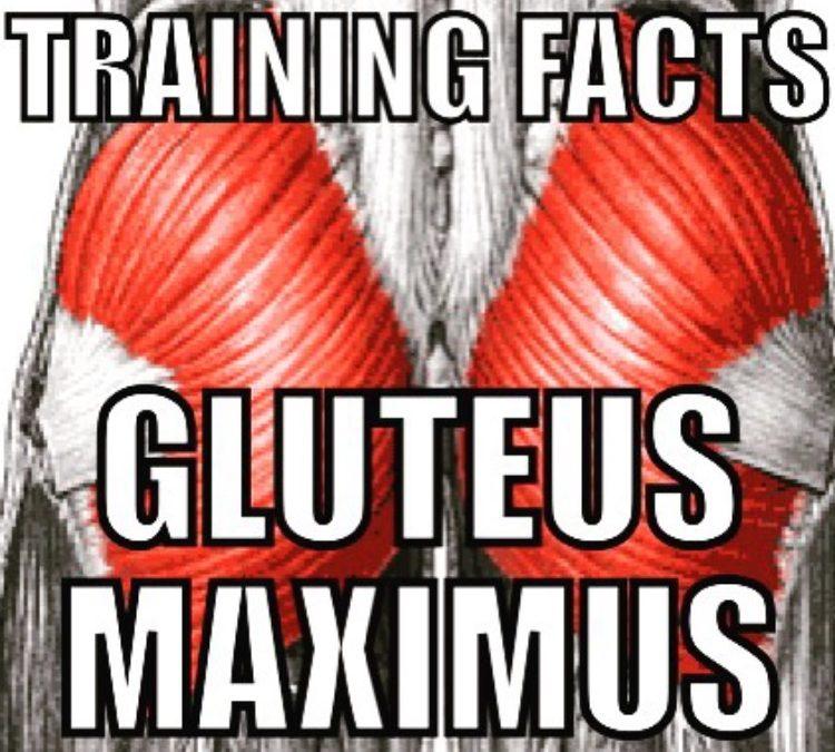 Gluteus Maximus