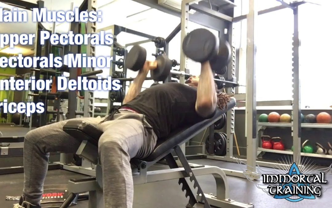Incline Swimmers Chest Press